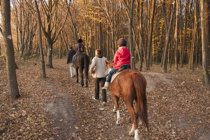 online equestrian safeguarding training